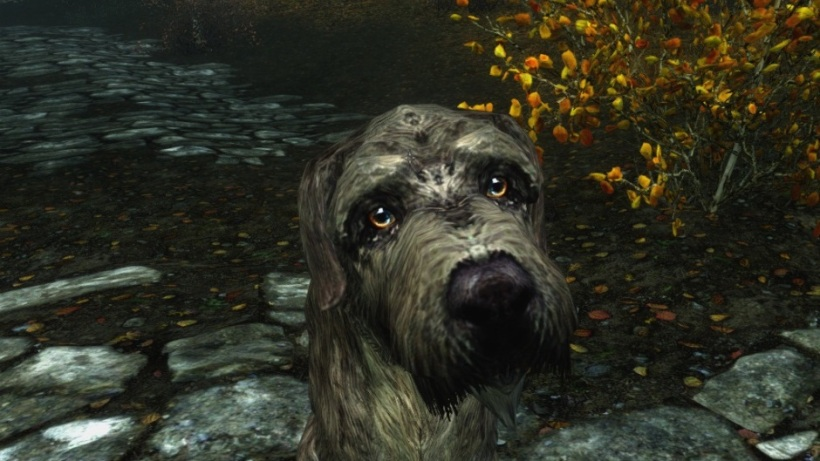 skyrim dog.jpg